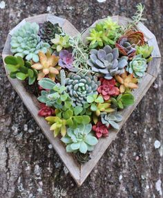 Such a beautiful succulent heart planter.