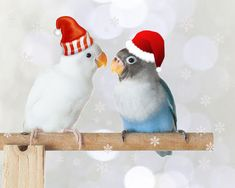 What Christmas Decorations Can I Use With 2 Lovebirds? What Is Christmas, Bird Food, Bird Cages, Cockatiel, Love Birds, Habitats, Parrot, Christmas Decorations, Canning