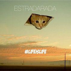 Лайф из лайф — Estradarada