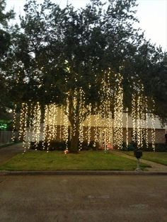 Raining Lights...how amazing would this look hanging from the trees for an outdoor event