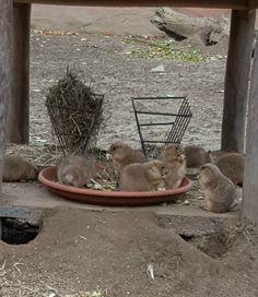 praeriehunde-vogelpark-marlow-1