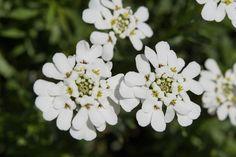 flowers, plants, fall, autumn, gardening
