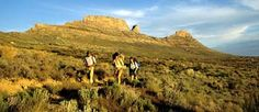 Dayhikes in the Cederberge Conservancy - Western Cape - South Africa. Sa Tourism, Day Hike, Countries Of The World, Monument Valley, South Africa, Cape, Old Things, Hiking, Travel