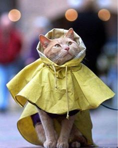 he doesn't like the rain