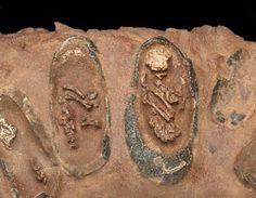 Fossilized dinosaur eggs with exposed embryos
