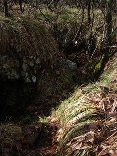 Overgrown World War 1 trench