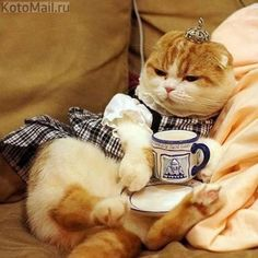 My goodness, servants are hopeless these days. I've been waiting three minutes for someone to refill my coffee...