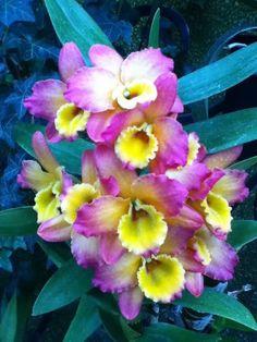 Orchids. So vibrant