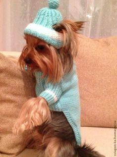 """Купить Свитерок +шапочка """"Прогулочный"""" - голубой, свитер для собаки, одежда для собак, аксессуары для собак"""