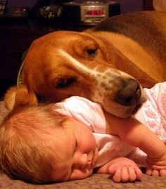 tender protector-Oh I want one so bad!!!....The Basset Hound Not the baby. LOL