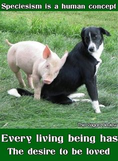 """Speciesism"" - The choice to love one type of animal as a family member, yet mistreat, kill, and eat another."