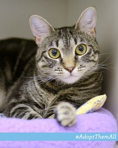 Sensitive Mona's our Pet of the Week! This sweet girl's a little on the shy side, but once she warms up to you, she soaks up the attention! She also LOVES to play with wand toys and laser pointers. Take home Mona today!