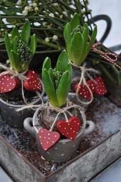 Idée de cadeau pour la Saint-Valentin : nature et romance