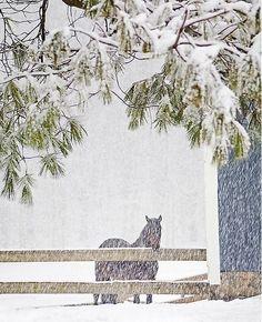 ~ Let It Snow ~