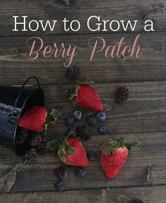 Grow your own Berry Patch.