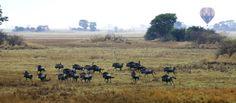 Kapinga Camp - A Luxury Safari Camp in the Kafue National Park