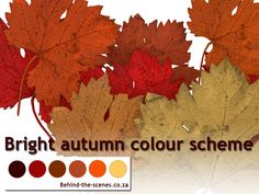 The bright autumn colour scheme has very strong shades of orange and brown. Color Schemes, Colours, Bright, Autumn, Blog, Articles, Fall Color Schemes, R Color Palette, Fall Season