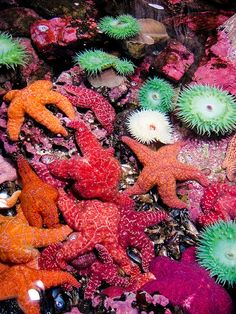 Snorkeling for starfish. Every color of the rainbow...so much beauty so few of us will see up close.