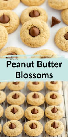 Peanut butter and chocolate combine perfectly in these decadent bite sized treats ! Soft peanut butter cookies topped with a chocolate kiss candy in the center. These peanut butter blossoms are perfect for any occasion! Easy No Bake Desserts, Fancy Desserts, Homemade Desserts, Best Dessert Recipes, Potluck Desserts, Easter Desserts, Delicious Recipes, Baking Recipes, Cookie Recipes
