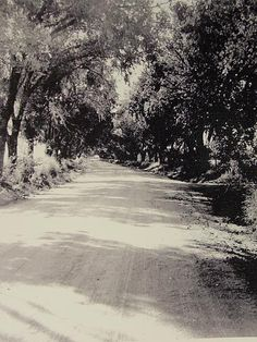 Drive lined with Chinese Elms which led to the Clutter family home Non Fiction Novels, Kansas, In Cold Blood, Close Image, Clutter, Sick, Gangsters, Serial Killers, True Crime