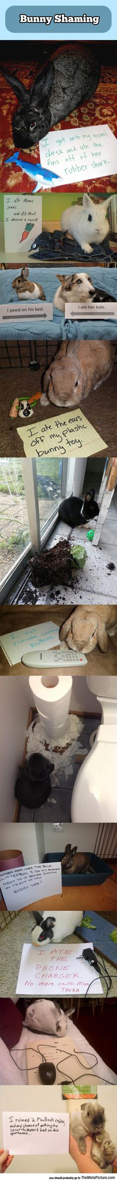 When Bunnies Misbehave
