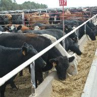 Feeder Panels For Cattle Hay Feeder Saves Time And Hay