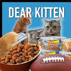 Is it your cat all set for the big game? Make sure to watch the all new Dear Kitten video for all the game day survival tips!