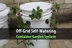 Off-Grid Self-Watering Container Garden System