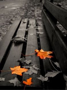 Ideas for photography nature black and white color splash Contrast Photography, Splash Photography, Autumn Photography, Color Photography, Black And White Photography, Photography Props, Newborn Photography, Colourful Photography, Black White Photography