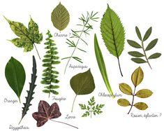 plantes-herbier-diy-feuilles