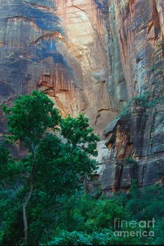 ✯ Colors of Zion.I want to go see this place one day.Please check out my website thanks. www.photopix.co.nz