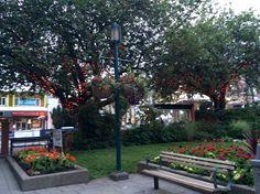 Veterans Park Poco Tri Cities, Remembrance Day, Sidewalk, Patio, City, Outdoor Decor, Plants, Home Decor, Walkway