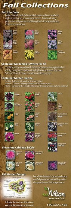 Bring beautiful colors to your garden during the cooler months. Autumn loving perennials & annuals will provide a finishing touch to any landscape in beds or containers.