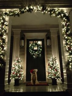 Holiday lights and a Holiday pup