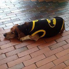 Consulta fotos y vídeos de Instagram de Full Cat & Dog de Colombia (@fullcatdecolombia)  talla 2xs, xs. s. m. l, xl. 2xl. 3xl, 4xl, 5xl, superman, batman, capitan america o mujer maravilla