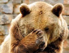 bear - Buscar con Google