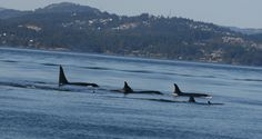 Sept 10th PM Residents out West @Five Star Whale Watching.