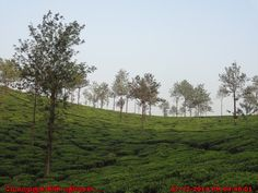 Wayanad Tea Estates
