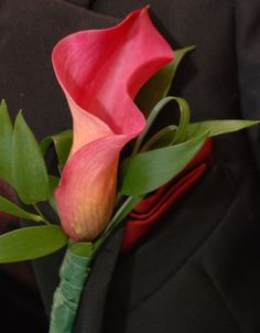 Calla Lily Photo:  This Photo was uploaded by Mystrale27. Find other Calla Lily pictures and photos or upload your own with Photobucket free image and vi...