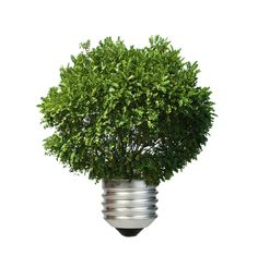 Lamp made of green tree. by Deyan Georgiev, via ShutterStock Photo Lamp, Green Trees, Go Green, Ecology, Conservation, Herbs, Sky, Display, Stock Photos