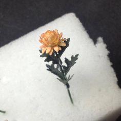 Miniature chrysanthemum tutorial - WeLoveMiniatures