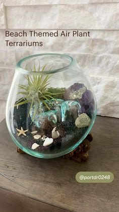 Terrarium Ideas, Air Plant Terrarium, Cool Plants, Air Plants, Garden Art, Garden Design, Witch Herbs, Household Plants, How To Make Terrariums