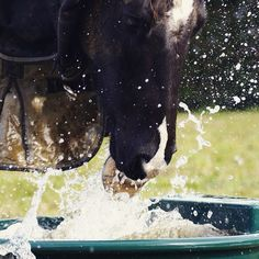 Just perfect love these water shots #photography #photos #photographer #equinephotography #equestrian #horses #pinto #water #watertrough #splashes #sony #sonya100 #timing #shutterspeed #fast #watersplashes #splash #foot #beaut #spamforspam #follow4follow #likesforlikes #follow #instagood #instahorses #followme #likes #instalike #instahorses #instaphoto by jessie5jay