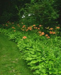 """Daylilies, Grandma called the very tall wild ones """"ditch"""" lilies."""
