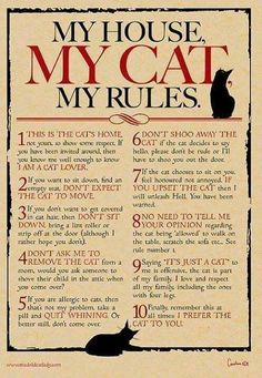 Peraturan Buat Tetamu Yang Tidak Menyukai Kucing , Peraturan Buat Tetamu Yang Ingin Datang Kerumah , Peraturan , Kucing
