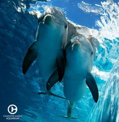 Winter & Hope at the Clearwater Marine Aquarium l Clearwater, Florida