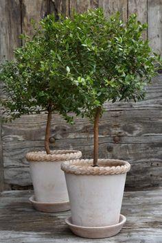 Berg's Original Pots - Bergs Potter Container Flowers, Container Plants, Container Gardening, Garden Planters, Terrace Garden, Pot Plante, Italian Garden, Garden Shop, Plantation
