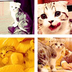 Yes, it's Meredith. <3