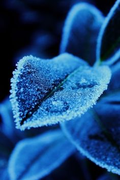 "0ce4n-g0d: ""Frosty Leaves by Constantin Fellermann on 500px"""