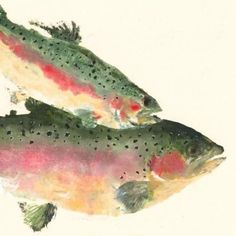 Rainbow Trout Over the Rainbow Gyotaku Fish by fredfisher